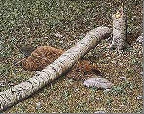 Beavercrush1.jpg