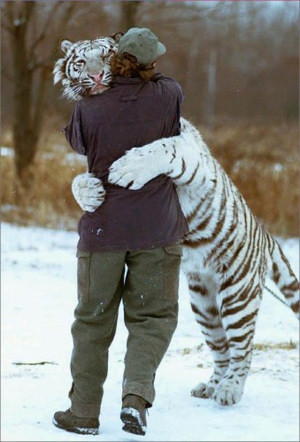 Tigerhug.jpg