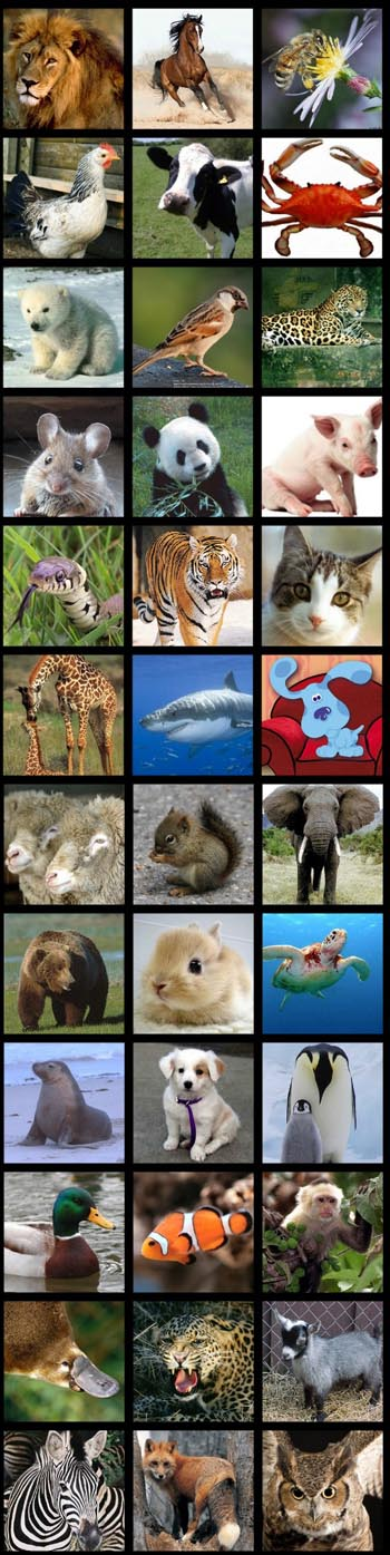 Shanes-animals-collage copy 6675.jpg