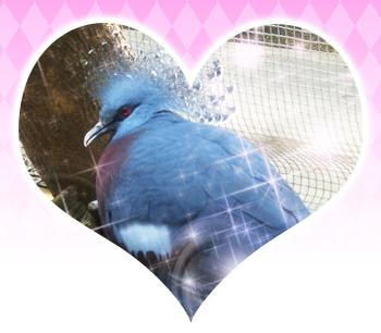 Hatoful Boyfriend Intermission 2 5524.jpg
