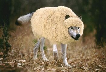 Wolf-in-sheeps-clothing1.jpg