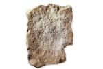Amman Citadel Inscription. Photo by Joel S. Burnett, Biblical Archaeology Review.