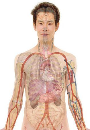 Anatomie man Geralt.jpg