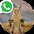 Logificación Whatsapp.png