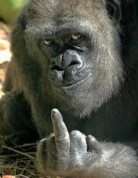 Gorilla dito medio.jpg