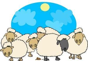 Gregge di pecore.jpg