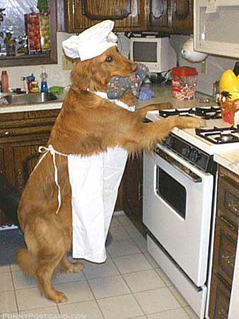 Can cuoco.jpg