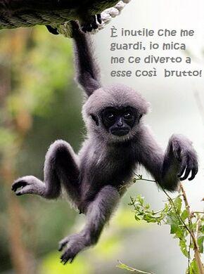 Gibbone.jpg