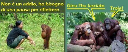 Orango lasciato dalla ragazza.jpg