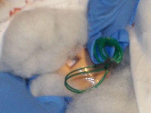 Vedete quel tubo verde? Tagliatelo e non ci sarà più bisogno del ciuccio per farlo tacere, potremo così analizzarlo in santa pace.