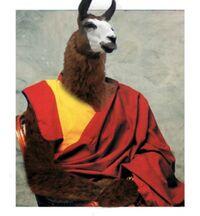 Dalai Lama animale.jpg