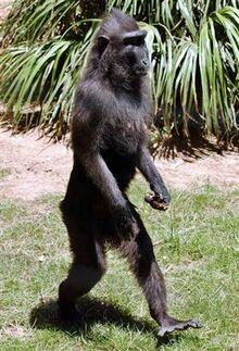 Scimmia4.jpg