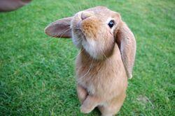 Coniglio tenerino.jpg