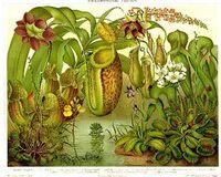 Raffigurazione di piante carnivore miste.jpg