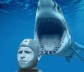 Enzo Maiorca attaccato da squalo.jpg