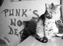 Gatto punk.jpg
