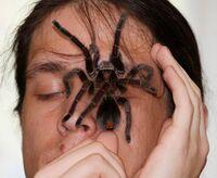 Tizio con grosso ragno in faccia.jpg