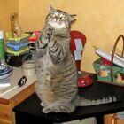 Gatto che prega.jpg