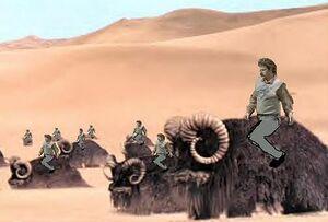 La corsa dei bantha.