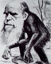 Charles Darwin scimmia.jpg