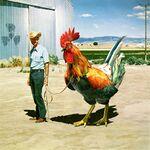 Pollo gigante.jpg