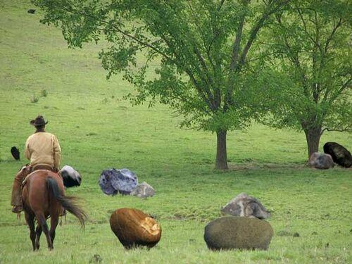 Cow Boy e sassi.jpg