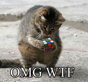 Gatto Rubik.jpg
