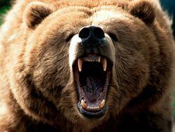 L orso yoghi d d amazon anjelica huston eric brevig