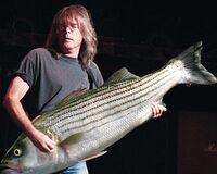 Cliff Williams con il basso-pesce.JPG