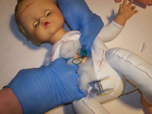 Ora apriamo la cavità toracica con forza per scoprire gli organi interni.