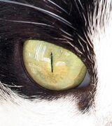 Cats eye closeup.jpg