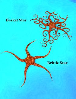 BloodSong-BrittleandBasketStars.png