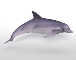 Poser4Dolphin.png