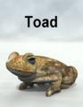 Mostdigitalcreations-Toad.png