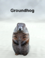 Mostdigitalcreations-Groundhog.png