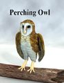 DebraRoss-PerchingOwl.png