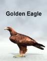 Mostdigitalcreations-GoldenEagle.png