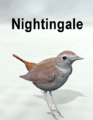 Mostdigitalcreations-Nightingale.png