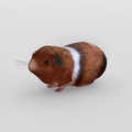 GuineaPig.png