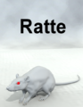Gallerie1-Ratte.png