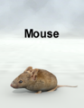 MostdigitalCreations-Mouse.png