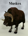DebraRoss-Muskox.png