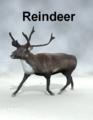 Mostdigitalcreations-Reindeer.png