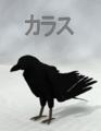 Yajiro-Crow.png