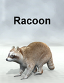 Mostdigitalcreations-Racoon.png