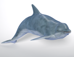 DolphinPoser.png