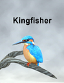 Mostdigitalcreations-Kingfisher.png