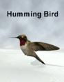 Papasmrfe-Humming Bird.png