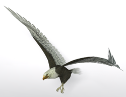 PoserEagle.png
