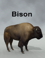 Mostdigitalcreations-Bison.png